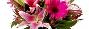 floreria los pimpollos casa hogar | viveros en j. b. alberdi 249, venado tuerto, santa fe