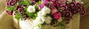 flores y diseÑos srl casa hogar | viveros en mitre 1700, venado tuerto, santa fe