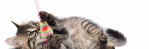 juguemos gatitos profesionales | veterinarios en libertad 1249, venado tuerto, santa fe