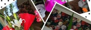 la flor mas bella casa hogar | viveros en mitre 878, venado tuerto, santa fe