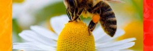miel la colmenita alimentos | delicatessen | golosinerias en pellegrini 548, venado tuerto, santa fe, santa fe