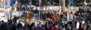sociedad rural de venado tuerto organismos | ong | instituciones en chile 1490, venado tuerto, santa fe