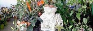 vivero y floreria mar�a delia casa hogar | viveros en chacabuco y santa fe, venado tuerto, santa fe